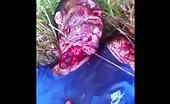 Throat slit and left for dead