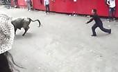 Bull vs man doesn't go well for the man 14