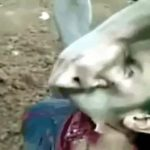 A man slaughtered to death in Syria 3