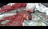 Syrian couple brutally killed