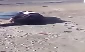 Israeli soldiers brutally killed young palestine guy
