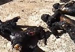 Unknown burned corpses 3