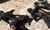 Unknown burned corpses 15