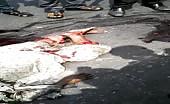 Horrible road accident in dhaka, bangladesh 16