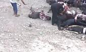 Prisoners in iraq were killed in the city of mosul