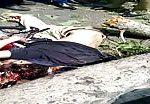 Biker killed by fallen tree 2