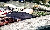 Biker killed by fallen tree 13