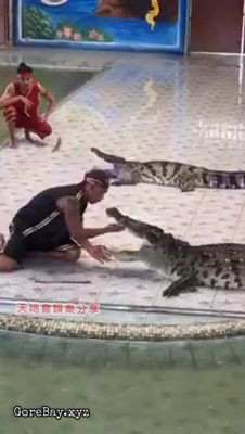 Aligator bites a shaman who was trying to impress the crowd 7