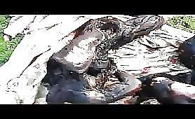 Syrian burned corpses