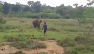Man gets stomped to death by an elephant