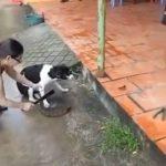 Vietnamese lady chops off dog's paw 3