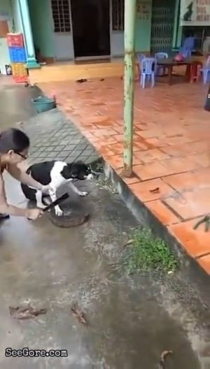 Vietnamese lady chops off dog's paw