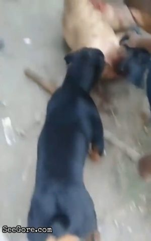 A man gets his private part mauled by a dog