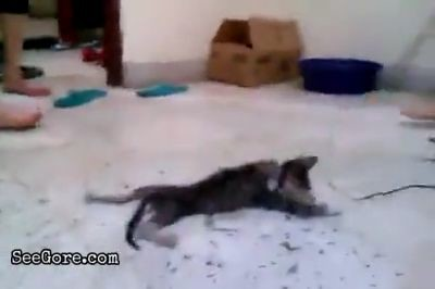 Viral video of a kitten stomped to death 1