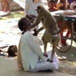 Mad macaque peels off poor man's scalp 3