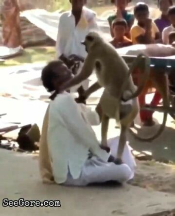Mad macaque peels off poor man's scalp 12